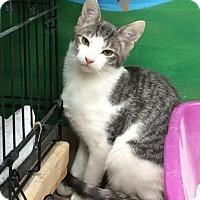 Adopt A Pet :: Milo - Byron Center, MI