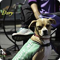 Adopt A Pet :: Dory - Alpharetta, GA