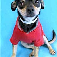 Adopt A Pet :: McGee - Phoenix, AZ