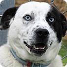 Adopt A Pet :: Niles