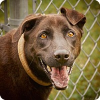 Adopt A Pet :: Mr. Bosely - Lincolnton, NC