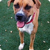Adopt A Pet :: Gazelle - Bradenton, FL