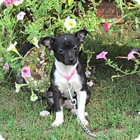 Adopt A Pet :: RUMOR - Bedminster, NJ