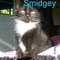 Adopt A Pet :: Smidgey - Satellite Beach, FL
