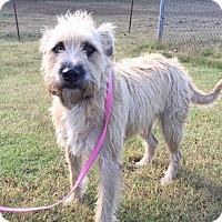 Adopt A Pet :: Navarro - Washington, DC