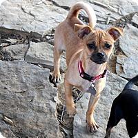 Adopt A Pet :: Tori - Muldrow, OK