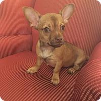 Adopt A Pet :: Gus Gus - Rockford, IL