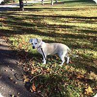 Adopt A Pet :: Egypt - Brooklyn, NY