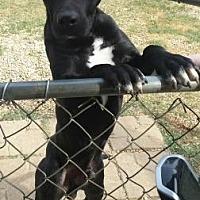 Adopt A Pet :: Zaxby - Centerville, GA