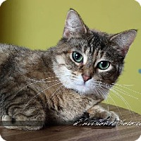 Adopt A Pet :: Hazel - Lake City, MI