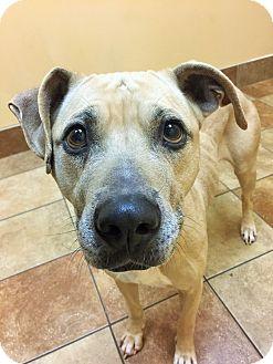 Terrier (Unknown Type, Medium) Mix Dog for adoption in Appleton, Wisconsin - Ida