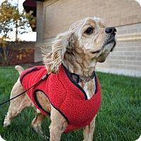 Adopt A Pet :: Max - Fayette, MO