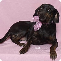 Adopt A Pet :: Bella - Kerrville, TX