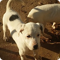 Adopt A Pet :: Merry - Pikeville, MD