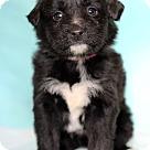 Adopt A Pet :: Orino