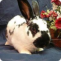 Adopt A Pet :: Gulliver - Newport, DE