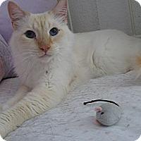 Adopt A Pet :: Fabio - Brea, CA
