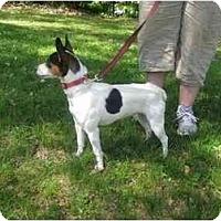 Adopt A Pet :: Delia - Braintree, MA