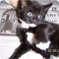 Adopt A Pet :: 6 Black & White Babies - Island Park, NY