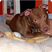 Adopt A Pet :: Naomi - Reisterstown, MD