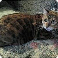 Adopt A Pet :: Monty - Lantana, FL