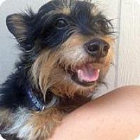 Adopt A Pet :: Kevin Bacon - Austin, TX