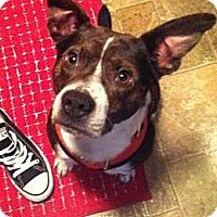 Adopt A Pet :: Comet - nashville, TN