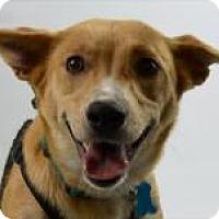 Adopt A Pet :: Gracie - Minneapolis, MN