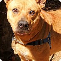 Adopt A Pet :: Robin - Dogshack.org - Sacramento, CA