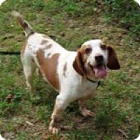 Adopt A Pet :: Emma - Dumfries, VA