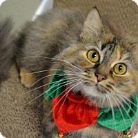 Adopt A Pet :: *ANNABEL - Sacramento, CA