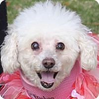 Adopt A Pet :: Zoey - La Costa, CA