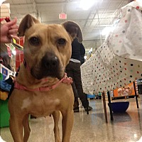 Adopt A Pet :: Supergirl - Delaware, OH