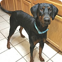 Adopt A Pet :: Hank - New Richmond, OH