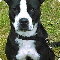 Adopt A Pet :: Adora - Windham, NH
