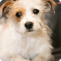Adopt A Pet :: Teddy Kay - Inglewood, CA