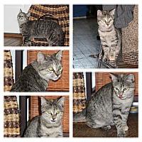 Adopt A Pet :: Millie - Hayes, VA