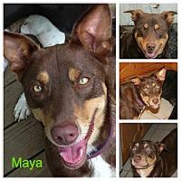 Adopt A Pet :: Maya - Alvarado, TX
