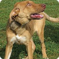 Adopt A Pet :: Paige - Unionville, PA