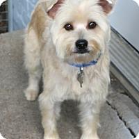 Adopt A Pet :: Dryden - Bedminster, NJ