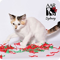 Adopt A Pet :: Sydney - Tomball, TX