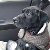 Adopt A Pet :: Romeo - Crete, IL