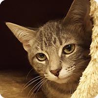 Adopt A Pet :: Solo Cup - Grayslake, IL
