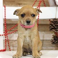 Adopt A Pet :: Sally - Waldorf, MD