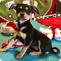 Adopt A Pet :: Rita - Santa Ana, CA