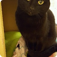 Adopt A Pet :: Whitney - Toledo, OH
