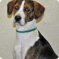 Adopt A Pet :: Keebler - Port Washington, NY