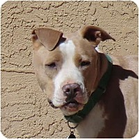 Adopt A Pet :: Lexa - Happy & Active! - Sacramento, CA