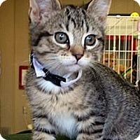 Adopt A Pet :: Elsa - Green Bay, WI