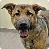 Adopt A Pet :: Brandy - Port Washington, NY